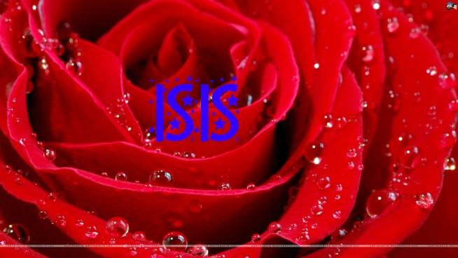 Rose Isis
