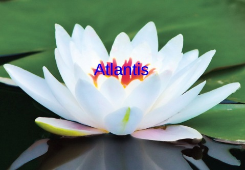 atlantis lotus