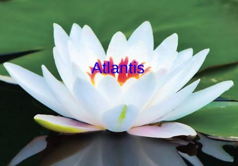 atlantis lotus